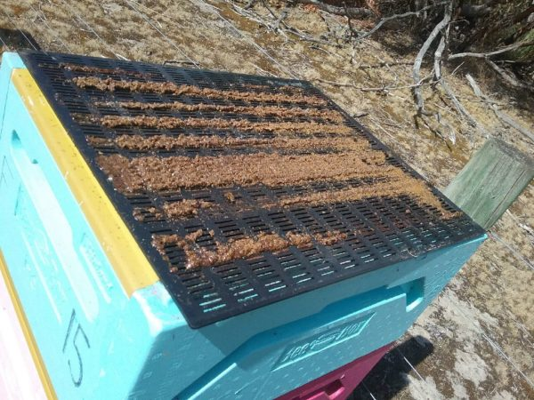 Propolis fresh from the hive